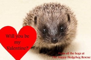 Have a hoggy Valentine!